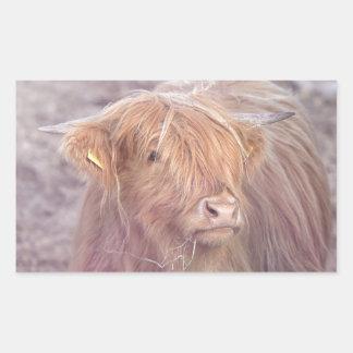Hochland-Kuh, Hochland-Vieh Rechteckiger Aufkleber