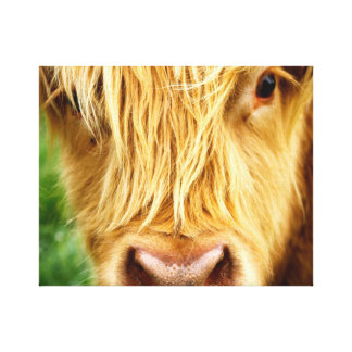 Hochland-Kuh-Leinwand-Druck Leinwanddruck
