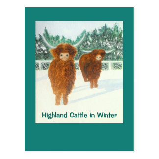 Hochland-Vieh in der Winter-Postkarte Postkarte