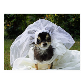 Hochzeits-Chihuahua-Braut Postkarte