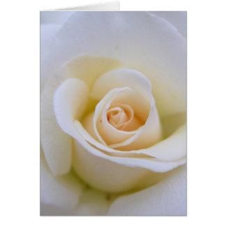 Hochzeits-Rose Karte