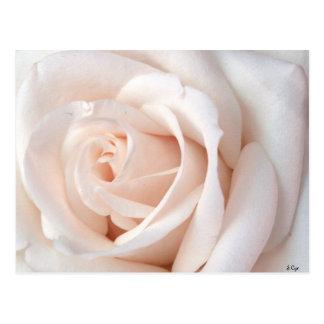 Hochzeits-Rose Postkarte
