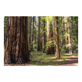 Hohe Bäume Fotodruck