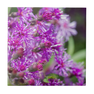 Hohe Ironweed-Wildblumen Keramikfliese