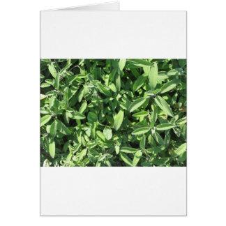 Hohe Winkelsicht der weisen Pflanze im Garten Karte