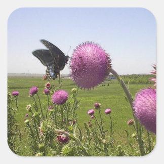 Hoher Gras-Grasland-Schmetterling auf violetter Quadratischer Aufkleber