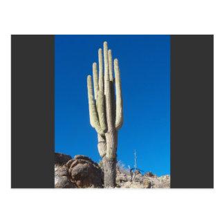 Hoher Saguaro Postkarte