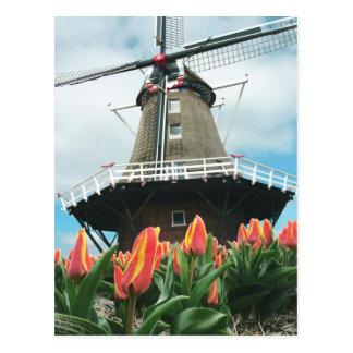 Holland-Tulpe-Zeit-Blumen-Windmühle Postkarte