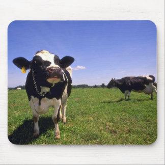Holstein-Milchvieh Mauspads