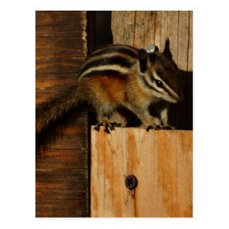 Holz und Chipmunk Postkarten