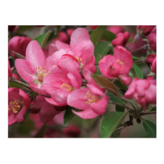 Holzapfel-Blume Postkarte