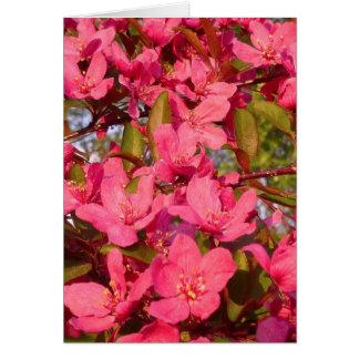 Holzapfel-Blüten Grußkarte