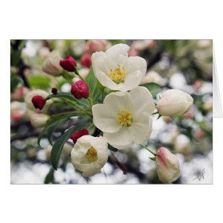 Holzapfel-Blüten Karte
