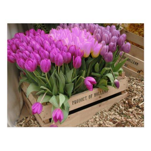 h lzerne kiste mit lila tulpen postkarte zazzle. Black Bedroom Furniture Sets. Home Design Ideas