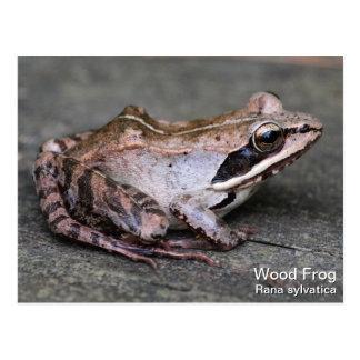 Hölzerner Frosch Postkarte