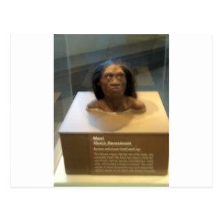 Homo floresiensis; Museumsausstellung Postkarte