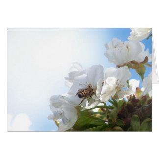 Honig-Biene auf Kirschblüten Karte