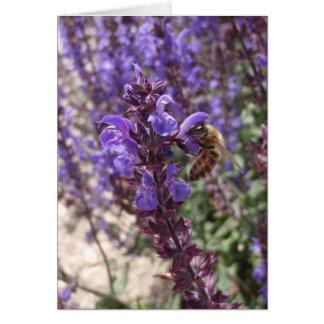 Honig-Biene auf Waldsalbei Karte