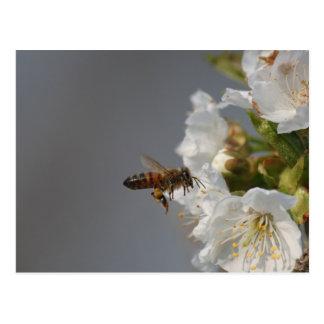 Honig-Biene Postkarte