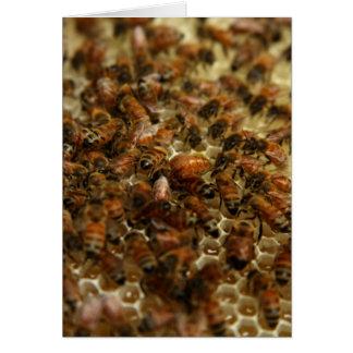 Honig-Bienen Karte