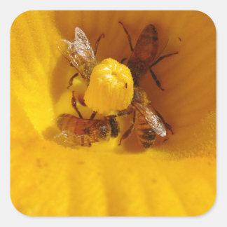 Honig-Bienen-Stau Quadratischer Aufkleber