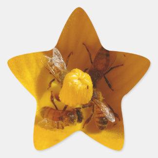 Honig-Bienen-Stau Stern-Aufkleber