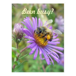 """Honigbiene auf Astern schnell """"hallo """" Postkarte"""