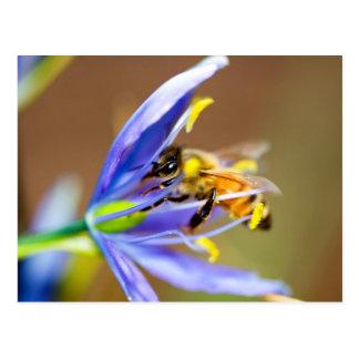Honigbiene auf blauer Blume Postkarte
