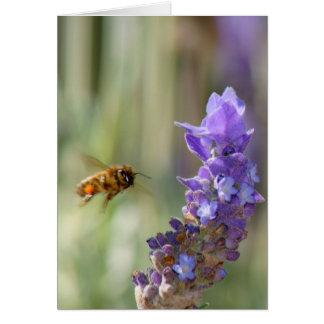 Honigbiene auf Lavendel Karte