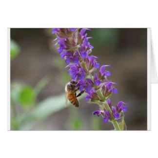 Honigbiene auf Salvia Karte