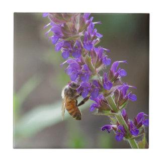 Honigbiene auf Salvia Kleine Quadratische Fliese