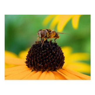 Honigbiene - die Mitte der Aufmerksamkeit Postkarte