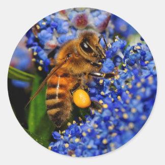 Honigbiene: Kalifornien-Flieder-Bestäuber Runder Aufkleber