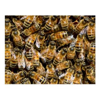 Honigbienen Postkarte