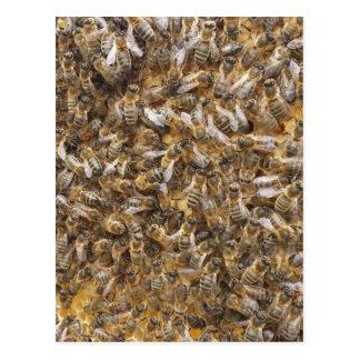 Honigbienen und mehr Honigbienen Postkarte