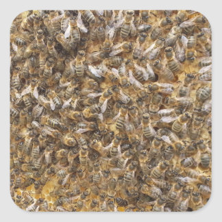 Honigbienen und mehr Honigbienen Quadratischer Aufkleber