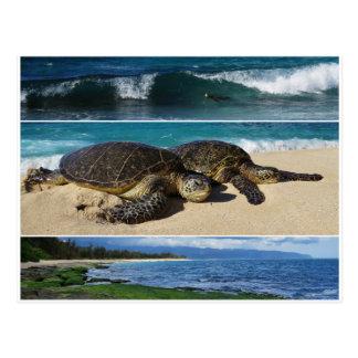 Honu, hawaiische grüne Meeresschildkröte, Oahu, Postkarte
