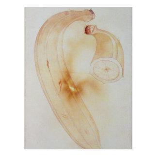 Horn-Banane Postkarten