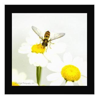 Hornisse auf Gänseblümchen Fotodruck