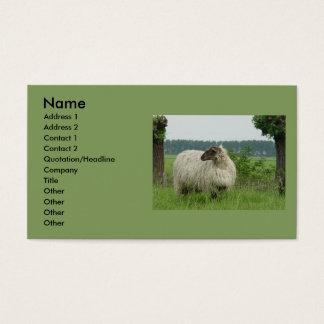 Hornlose Schafe Visitenkarte