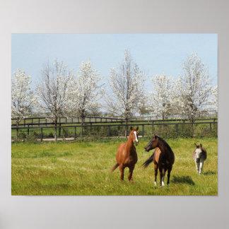 Horseplay: Zwei Pferde und ein Esel im Frühjahr Poster