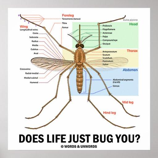 H rt das leben sie gerade ab moskito anatomie poster for Schwimmingpools preiswert