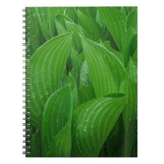 Hosta-Blätter mit Regentropfen-Notizbuch Spiral Notizblock