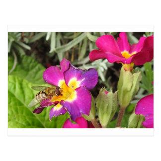 hoverfly stillstehend postkarte