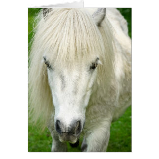 Howgillhounds kardiert die Shetlandinseln-Pony Karte
