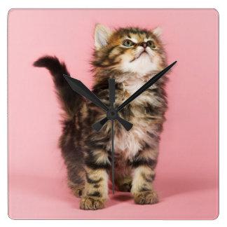 Hübsch im rosa Kätzchen Quadratische Wanduhr