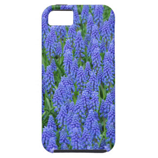 Hübsche blaue Muscari-Blumen iPhone 5 Schutzhülle