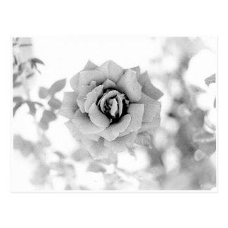 Hübsche Blume Postkarte