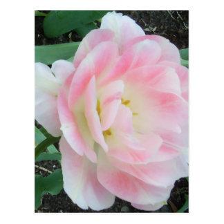 Hübsche empfindliche weibliche Blumen-weiße rosa Postkarte