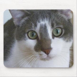 Hübsche graue und weiße Katze Mousepads